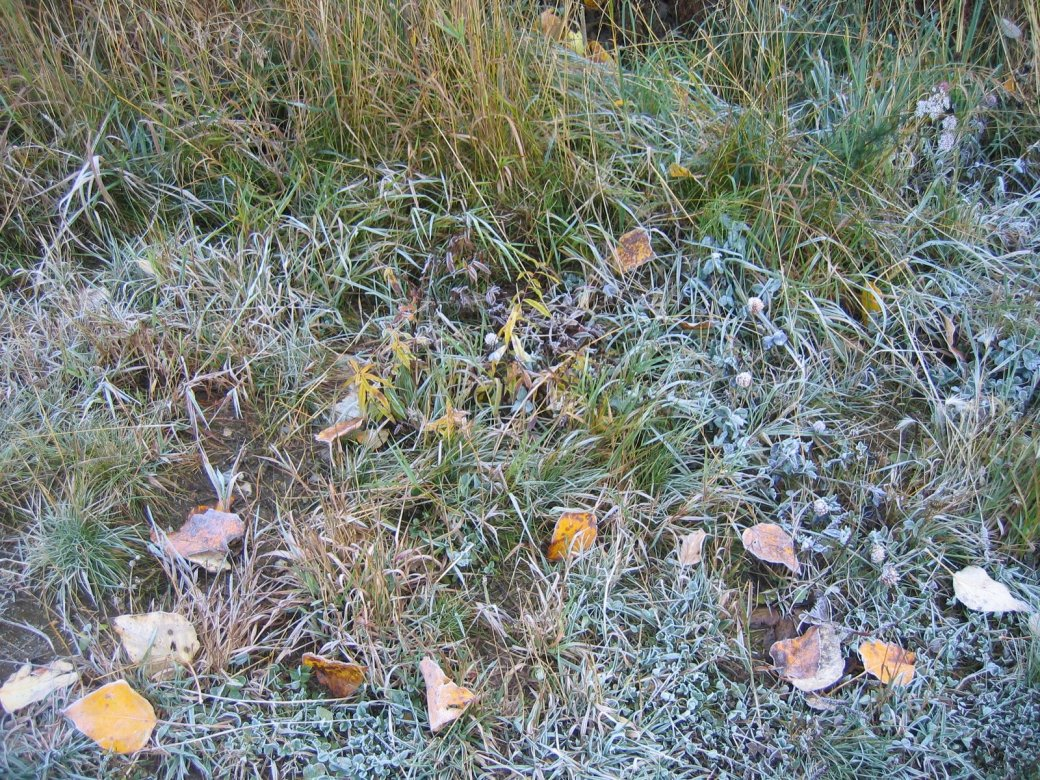 Ok... some of it is frost!