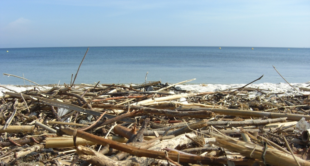 Driftwood on La Capte Beach