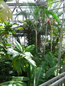 Inside the Glasshouses