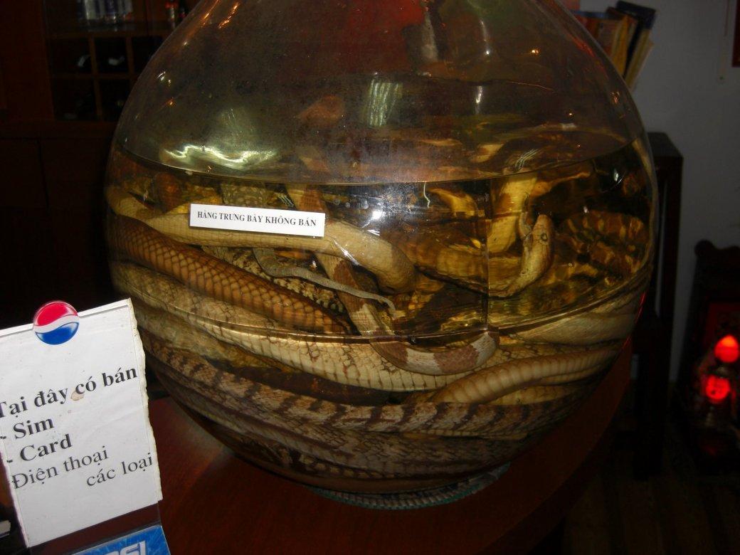 Snake wine anyone?