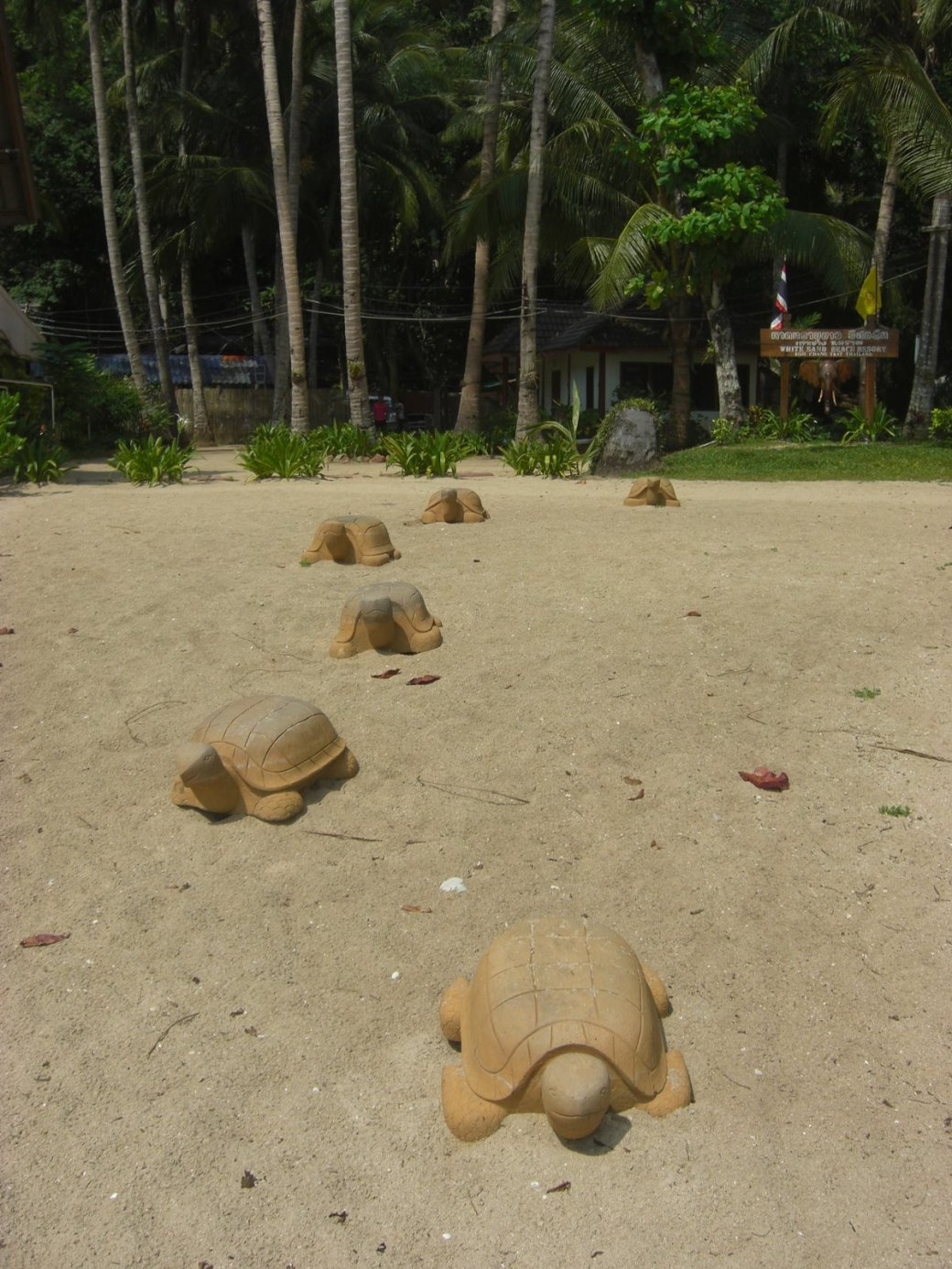 Wooden turtles...