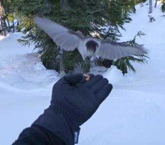 I'm the bird wispherer now!