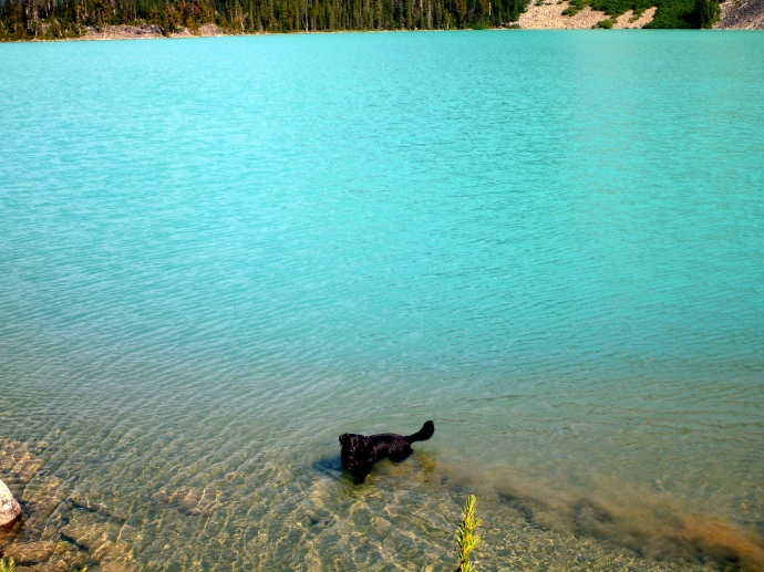 Jesse playing in the lake. He isn't leaking polution