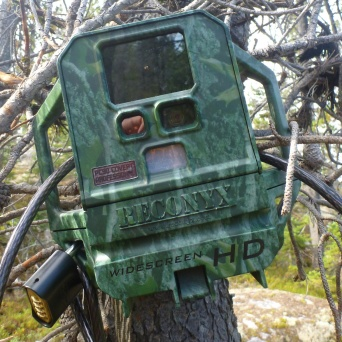 Wonder what this thing is? Was pointed towards the Bare Loon camp bear cache